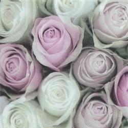 Poupata růží 33x33