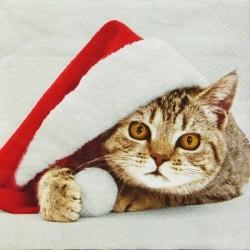 Kočička Santík 33x33