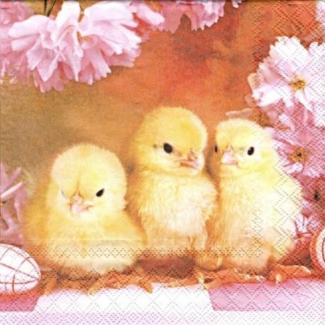 Tři kuřátka 33x33