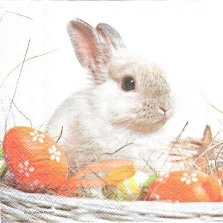 Zajíček mezi vajíčky 33x33