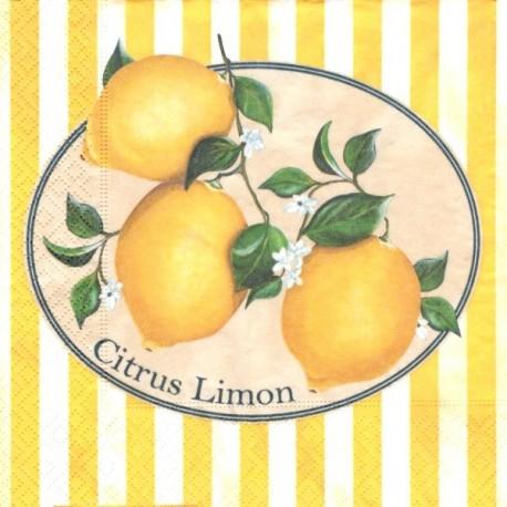 Citrus Limon 33x33