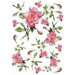 Papír rýžový A4 Růže plané