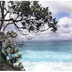 Reprodukce obrazu 30x30 - Tropical Surf