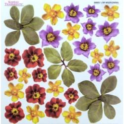 Sospeso folie 24x24 - květiny