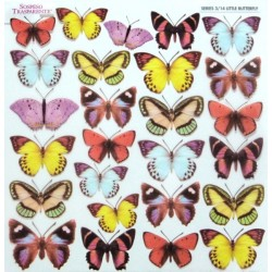 Sospeso folie 24x24 - malí motýlci