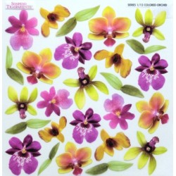 Sospeso folie 24x24 - barevné orchideje