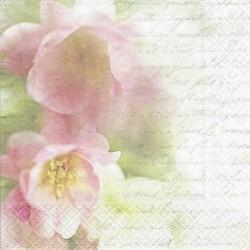 Jabloňový květ, písmo 33x33