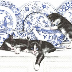 Kočky a porcelán 33x33