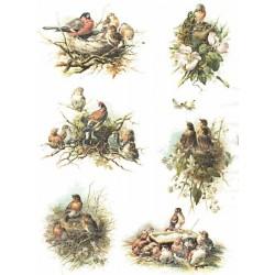 Papír rýžový A4 Ptačí hnízda