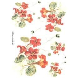 Papír rýžový A4 Lichořešišnice