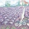 Levandulové pole 33x33
