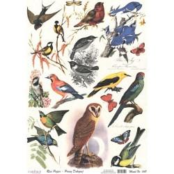 Rýžový papír A4 Ptáci