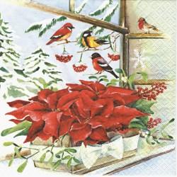 Vánoční hvězda v truhlíku na okně 33x33
