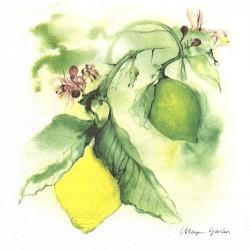 Citrony akvarel 33x33