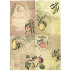 Papír rýžový A4 Ovoce, čtyři obrázky