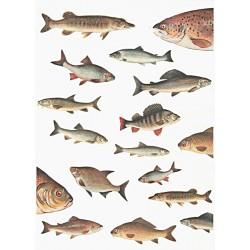 Papír rýžový A4 Ryby