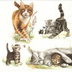 Kočky s koťaty 33x33