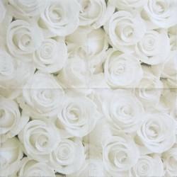 Krémové růže 33x33
