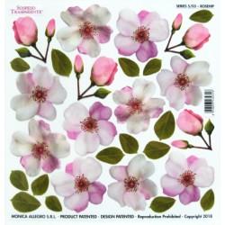Sospeso folie 24x24 - šípková růže