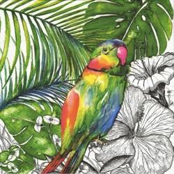 Papoušek 33x33