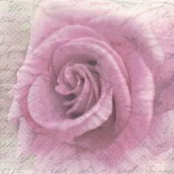 Růžová růže na písmu 33x33
