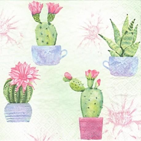 Malované kaktusy 33x33