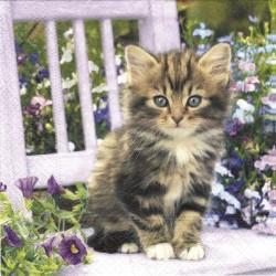 Koťátko na židli 33x33