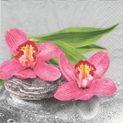 Růžové orchideje 33x33