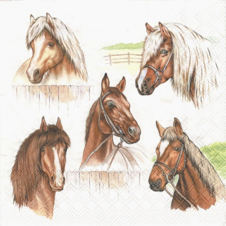 Hlavy koní 33x33