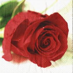 Červená růže 33x33