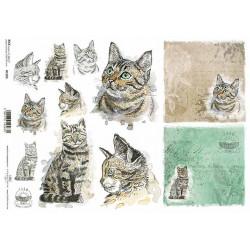 Papír rýžový A4 Šťastná farma, kočky