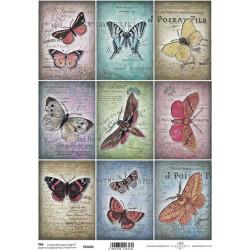 Scrap.papír A4 Kartičky - motýli