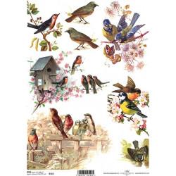 Papír rýžový A4 Ptáčci a jaro