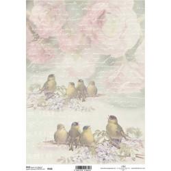 Papír rýžový A4 Ptáčci a písmo
