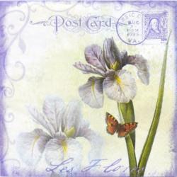 Kosatce Post Card 33x33