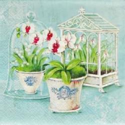 Orchideje 33x33