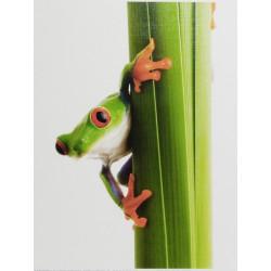 Reprodukce 18x24 - Žabka na stéblu 2