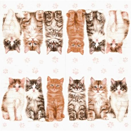 Koťátka 33x33