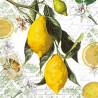 Lemon 33x33