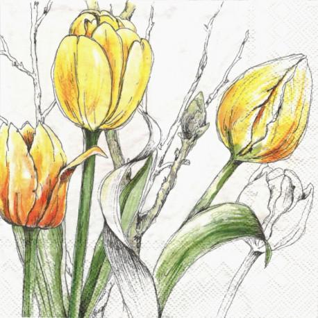 Žluté tulipány 33x33