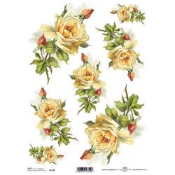 Papír rýžový A4 Žluté růže s poupaty