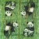 Pandy 33x33