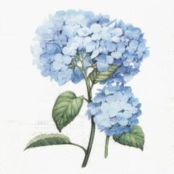 Modrá hortenzie 33x33