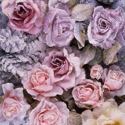 Zimní růže 33x33