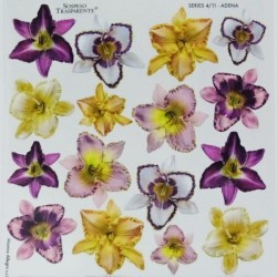 Sospeso folie 24x24 - květy lilií