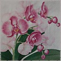 Lilie, orchideje a ibišky