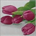 Magnolie a tulipány