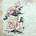 Květiny, rostliny