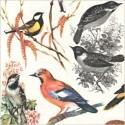 Ptáci, klícky